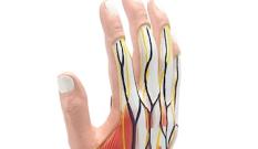 Anatomisches Handmodell
